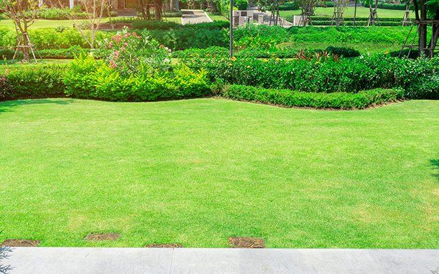 landscaping in arlington texas
